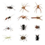 Insects, spiders and scorpion. Collection of African invertebrates (insects, spiders, scorpions) on white Royalty Free Stock Photography