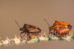 Insects Royalty Free Stock Image