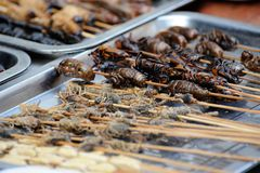 Insects on sticks stock photography