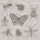 Insects vector illustration Royalty Free Stock Photo