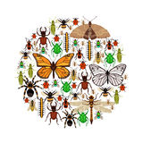 Insects Vector Illustration Stock Photo