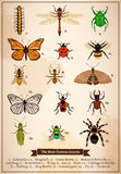 Insects Vintage Book Page Royalty Free Stock Photography