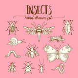 Insects vintage set of hand drawn doodle sketch Royalty Free Stock Photography