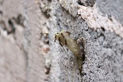 Insects on the wall stock photo