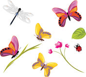 Insects on a white background stock photo
