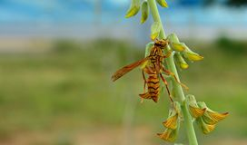 Insects and wild flowers Royalty Free Stock Photography