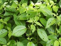 Insectspoor op de bladeren Stock Foto