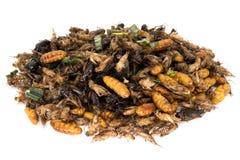 Insectvoedsel Stock Afbeeldingen