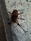 Insedt de la mosca Foto de archivo