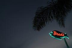 Insegna al neon con la palma Immagini Stock
