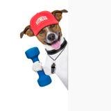 Insegna del cane di forma fisica Fotografie Stock
