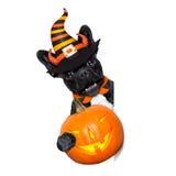Insegna del cane di Halloween fotografia stock libera da diritti