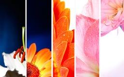 Insegna del fiore fotografia stock