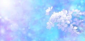 Insegna del fiore del bokeh del sole Immagini Stock Libere da Diritti