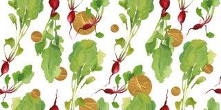 Insegna dell'orto con il modello senza cuciture del bio- ravanello naturale per lo sconto, vendita alimento fresco di vegetable Fotografie Stock