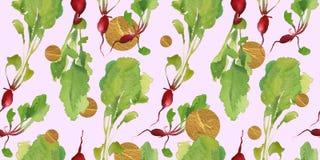 Insegna dell'orto con il modello senza cuciture del bio- ravanello naturale per lo sconto, vendita alimento fresco di vegetable Immagini Stock