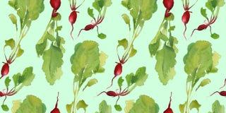 Insegna dell'orto con il modello senza cuciture del bio- ravanello naturale per lo sconto, vendita alimento fresco di vegetable Fotografia Stock