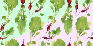 Insegna dell'orto con il modello senza cuciture del bio- ravanello naturale per lo sconto, vendita alimento fresco di vegetable Immagine Stock
