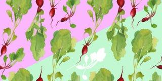 Insegna dell'orto con il modello senza cuciture del bio- ravanello naturale per lo sconto, vendita alimento fresco di vegetable Immagine Stock Libera da Diritti