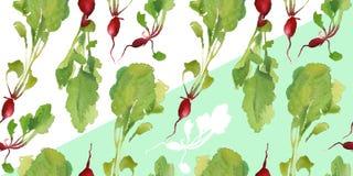 Insegna dell'orto con il modello senza cuciture del bio- ravanello naturale per lo sconto, vendita alimento fresco di vegetable Fotografia Stock Libera da Diritti