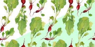 Insegna dell'orto con il modello senza cuciture del bio- ravanello naturale per lo sconto, vendita alimento fresco di vegetable Fotografie Stock Libere da Diritti