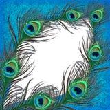 Insegna della piuma del pavone Fotografia Stock
