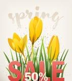 Insegna della primavera con croco Immagine Stock