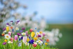 Insegna della primavera con i flowres selvaggi Immagine Stock