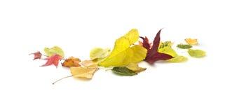 Insegna delle foglie di autunno immagine stock