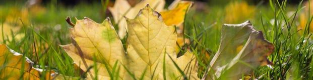 Insegna delle foglie di autunno gialle cadute su terra Immagine Stock