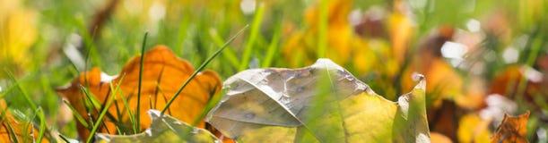 Insegna delle foglie di autunno gialle cadute su terra Fotografie Stock