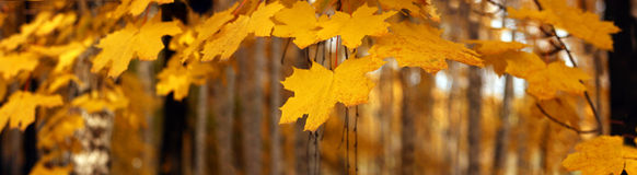 Insegna di autunno Fotografia Stock Libera da Diritti
