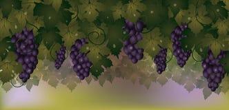 Insegna di autunno con l'uva Immagini Stock Libere da Diritti