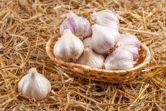 Insegna di orizzontale dell'aglio Eco che coltiva concetto Interi agli e chiodi di garofano nel canestro della paglia sul pezzo d Fotografia Stock