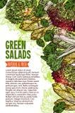 Insegna di schizzo dell'insalata verde dell'ortaggio a foglia fresco royalty illustrazione gratis