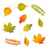 Insegna di vendita di vettore del fogliame di autunno dell'acquerello illustrazione di stock