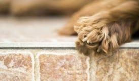 Insegna di web della zampa del cane con lo spazio della copia Immagini Stock