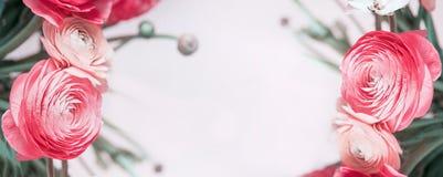 Insegna floreale con il ranunculus o le rose rosso pastello, Immagini Stock