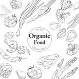 Insegna organica dell'alimento fresco Illustrazione lineare di vettore Fotografia Stock