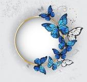 Insegna rotonda con il morpho blu delle farfalle Immagine Stock Libera da Diritti
