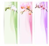 Insegna, segnalibri con le orchidee Immagine Stock