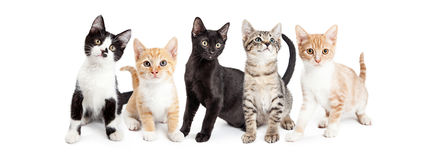Insegna sociale di media dei gattini svegli Fotografia Stock