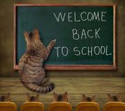 Insegnante del gatto alla lavagna 1 Fotografia Stock