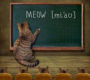 Insegnante del gatto alla lavagna 5 Fotografia Stock