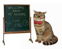 Insegnante del gatto alla lavagna 3 Immagini Stock Libere da Diritti