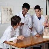 Insegnante Teaching Experiment Immagine Stock Libera da Diritti