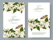 Insegne del fiore del gelsomino illustrazione di stock