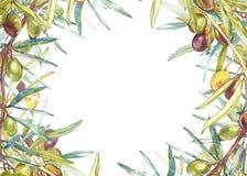 Insegne orizzontali con le olive nere e verdi mature su fondo bianco Progetti per olio d'oliva, l'imballaggio verde oliva, natura illustrazione di stock