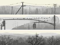 Insegne orizzontali degli uccelli dello stormo sugli alberi e sulle linee elettriche. Immagini Stock Libere da Diritti