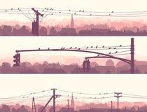 Insegne orizzontali degli uccelli dello stormo sulle linee elettriche della città. Immagine Stock